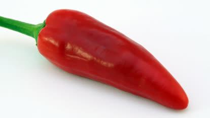 Jalapeno chilli